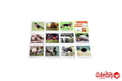 اسباب-بازی-کارت رنگی بین بین طرح حیوانات اهلی
